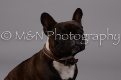 M&N Photography -DSC_2569