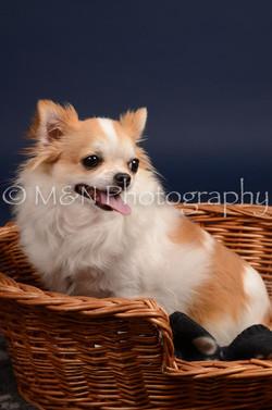 M&N Photography -DSC_0599
