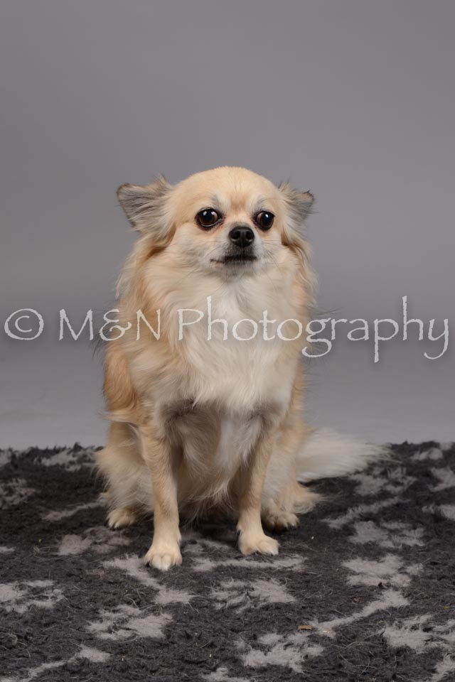 M&N Photography -DSC_1804
