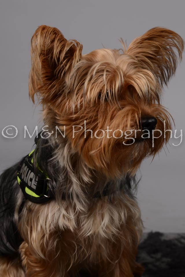 M&N Photography -DSC_2631