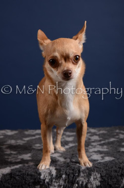 M&N Photography -DSC_4107