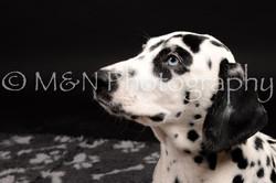 M&N Photography -DSC_9775