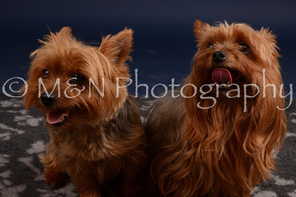 M&N Photography -DSC_0418
