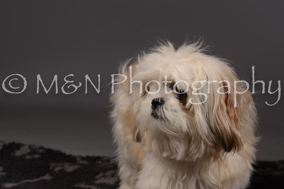 M&N Photography -DSC_2038