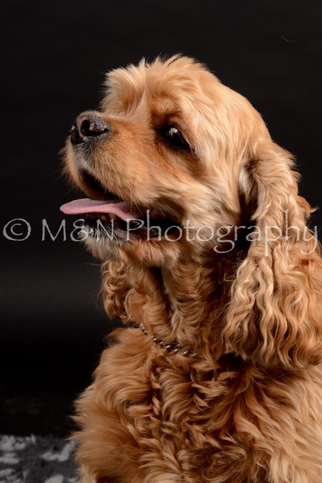 M&N Photography -DSC_9845