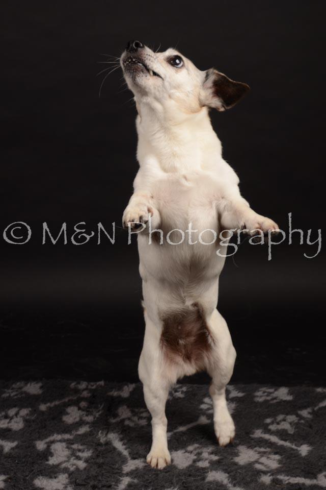 M&N Photography -DSC_0100
