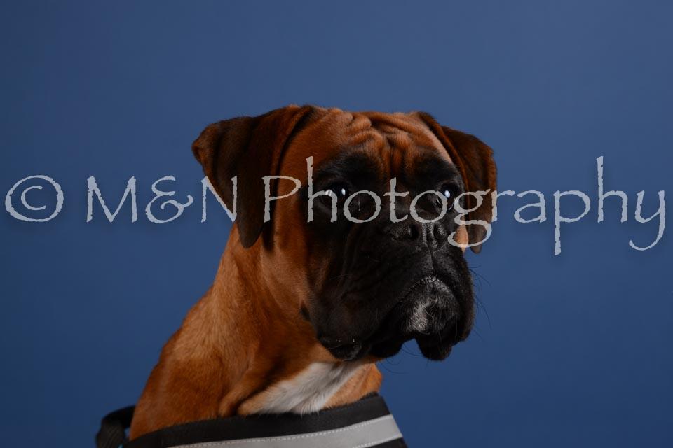 M&N Photography -DSC_5252