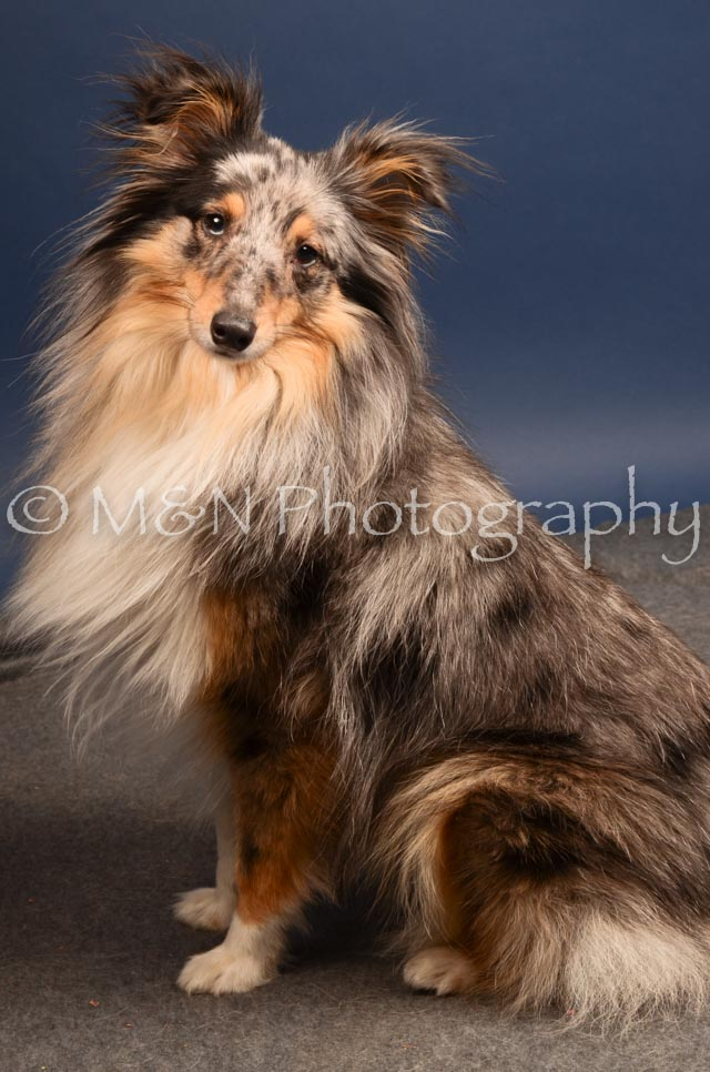 M&N Photography -DSC_4449