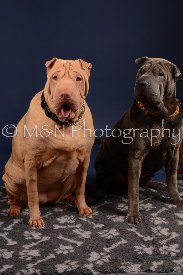M&N Photography -DSC_0311