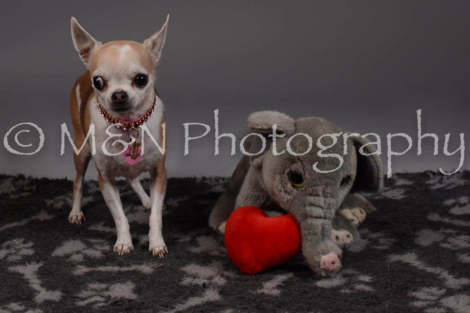 M&N Photography -DSC_2190