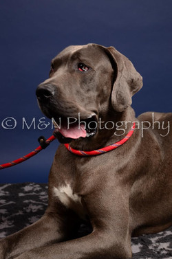 M&N Photography -IMG_4607