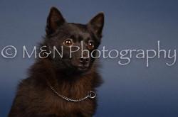 M&N Photography -DSC_3916