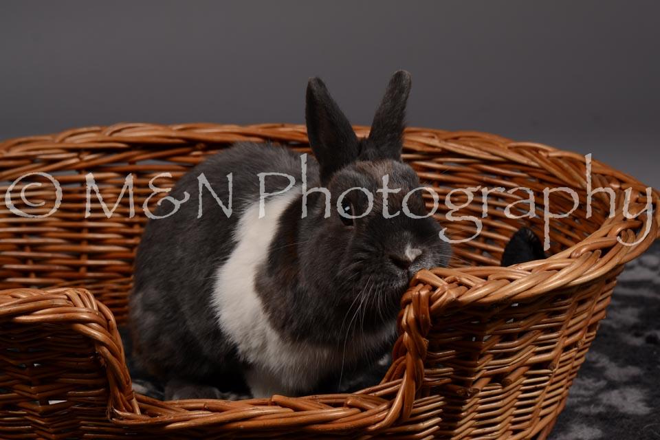 M&N Photography -DSC_2200