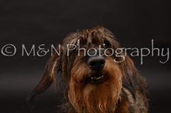 M&N Photography -DSC_0003-2