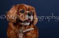 M&N Photography -DSC_4295