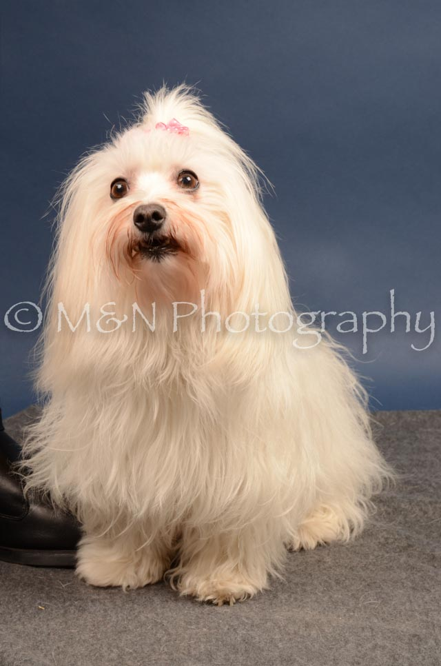 M&N Photography -DSC_4127