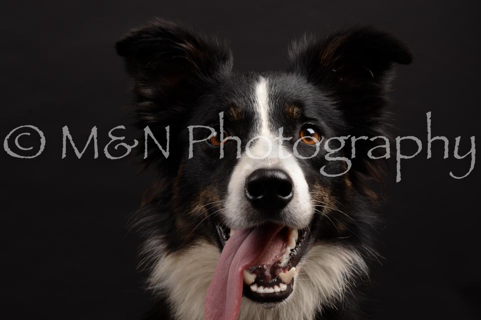M&N Photography -DSC_9940
