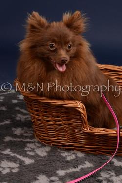 M&N Photography -DSC_0443