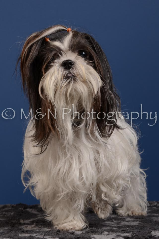 M&N Photography -DSC_5330