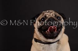 M&N Photography -DSC_5647