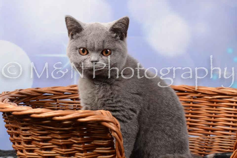 M&N Photography -DSC_7017