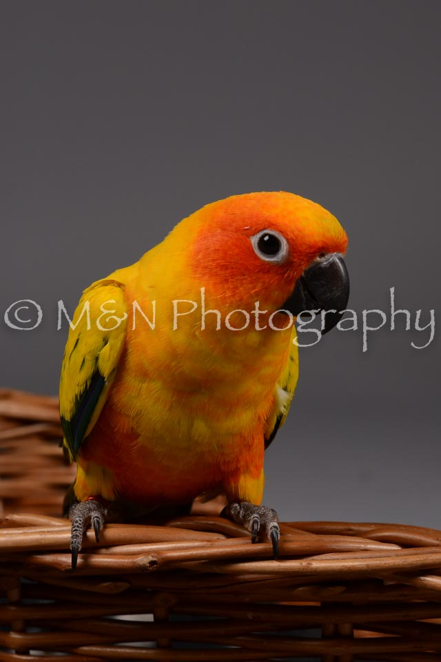 M&N Photography -DSC_2119