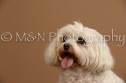 M&N Photography -_SNB0873
