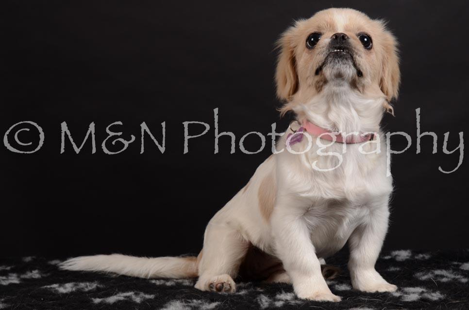 M&N Photography -DSC_6005