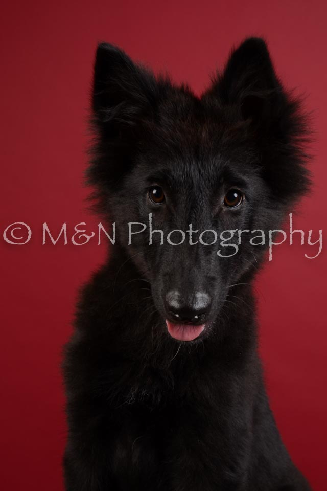 M&N Photography -DSC_3366