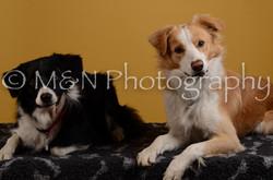 M&N Photography -DSC_4492