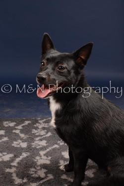 M&N Photography -DSC_0713
