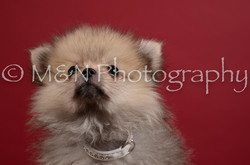 M&N Photography -DSC_3409