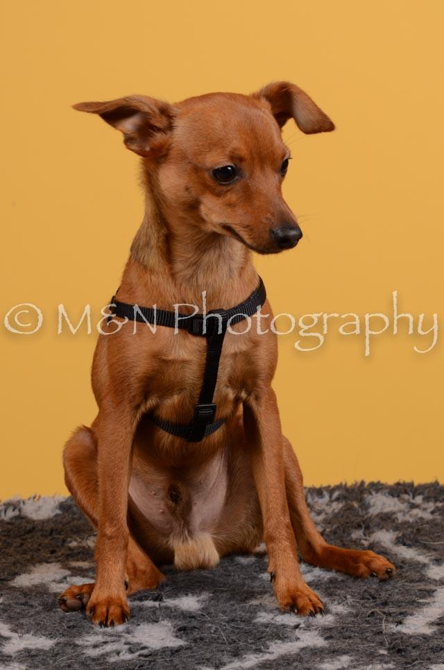 M&N Photography -DSC_4592