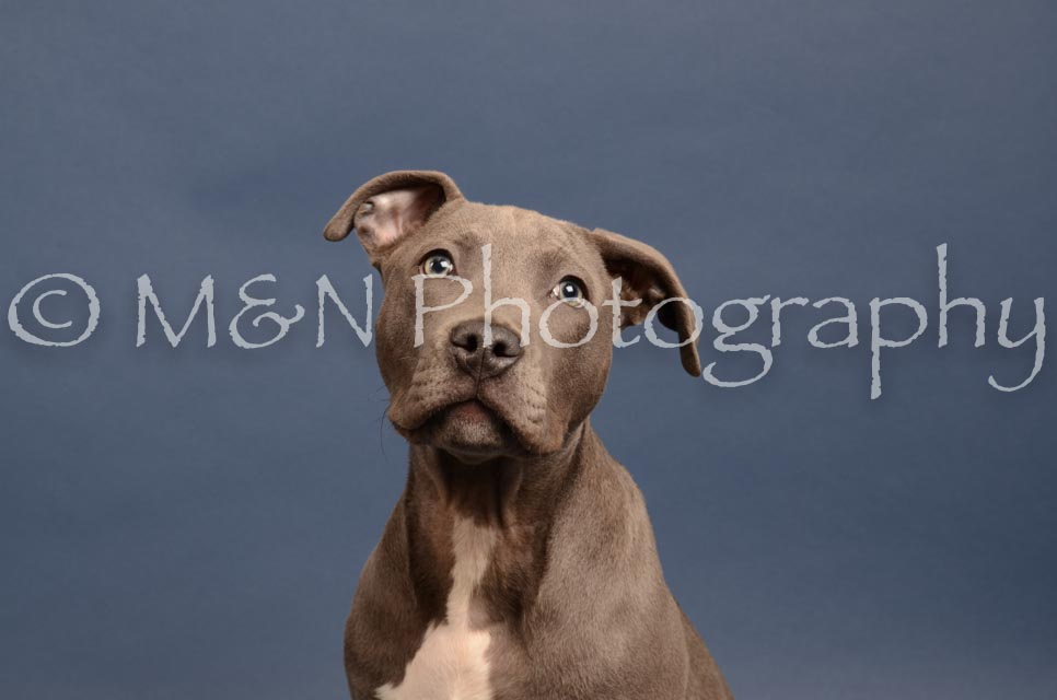 M&N Photography -DSC_4312