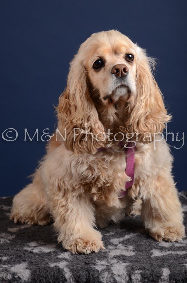 M&N Photography -DSC_4012