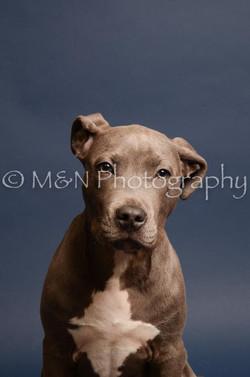 M&N Photography -DSC_4310