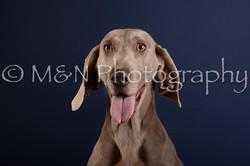 M&N Photography -DSC_4136