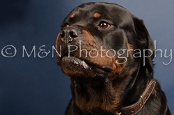 M&N Photography -DSC_4052