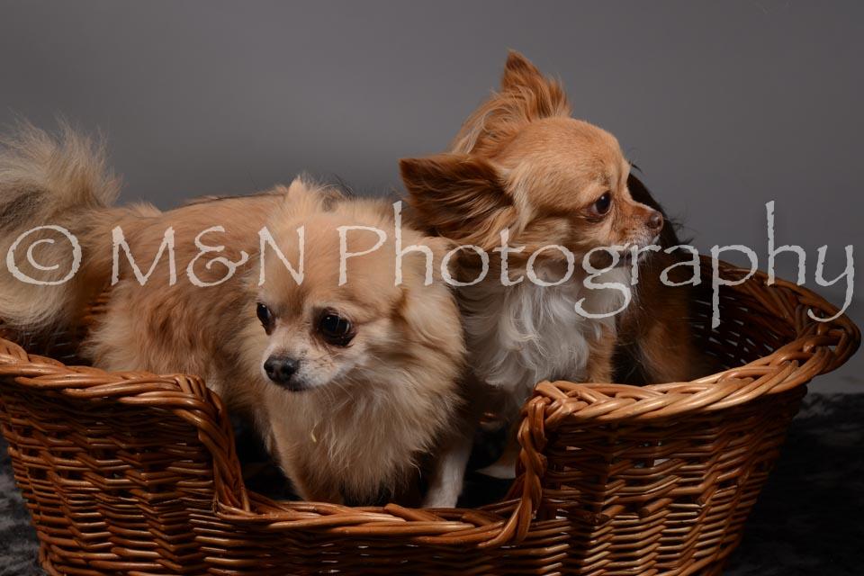 M&N Photography -DSC_1815