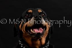 M&N Photography -DSC_2375