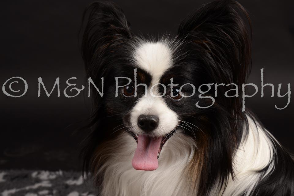 M&N Photography -DSC_9809