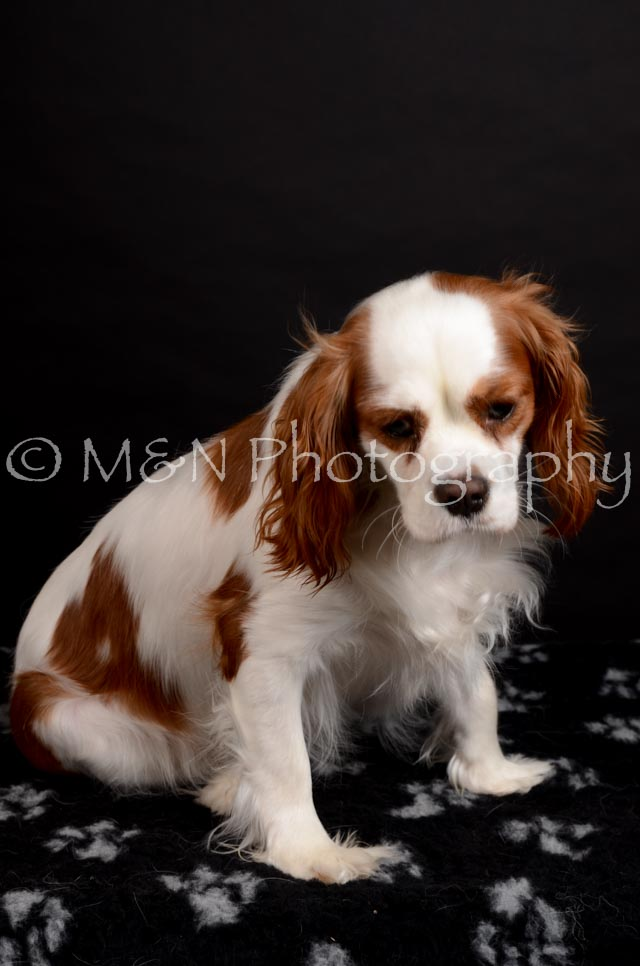 M&N Photography -DSC_5810