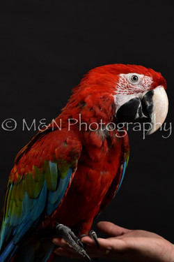 M&N Photography -DSC_2693