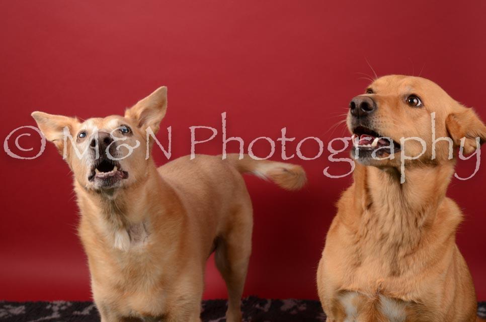 M&N Photography -DSC_6745