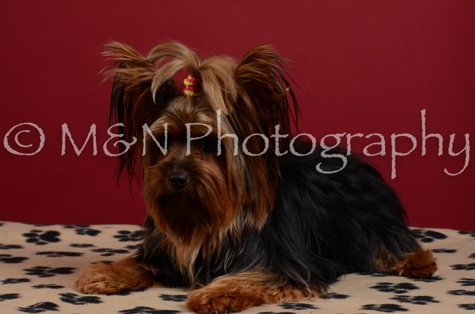 M&N Photography -DSC_3553