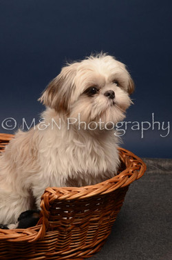 M&N Photography -DSC_4729