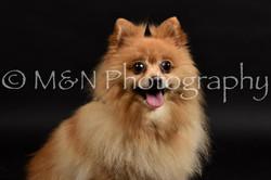 M&N Photography -DSC_2592
