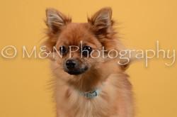 M&N Photography -DSC_4740