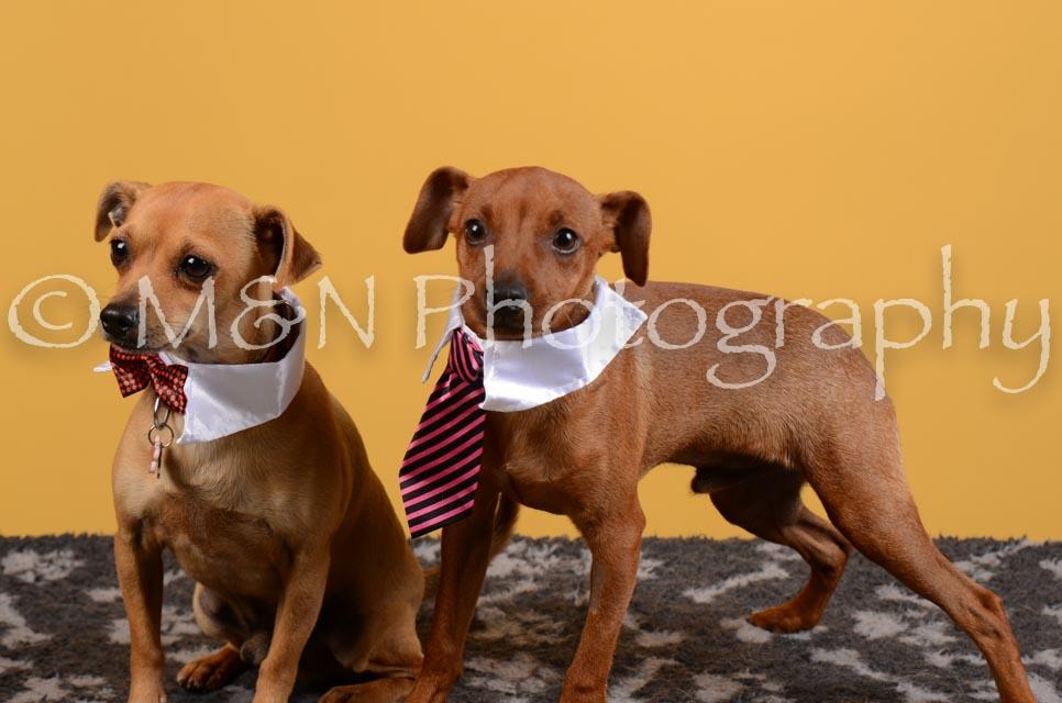 M&N Photography -DSC_4637