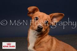M&N Photography -DSC_4573-2